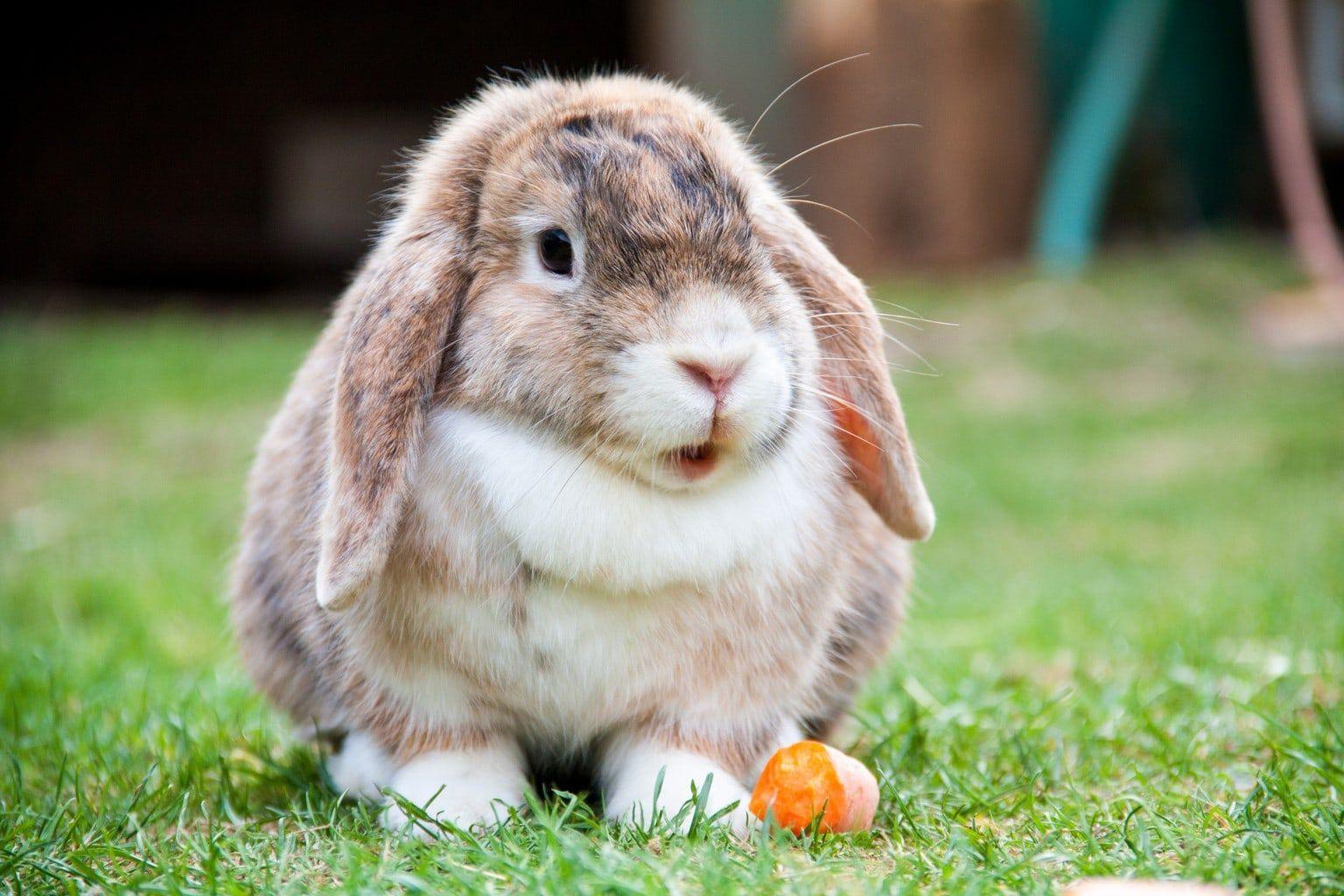 Разведение содержание кроликов в домашних условиях для начинающих