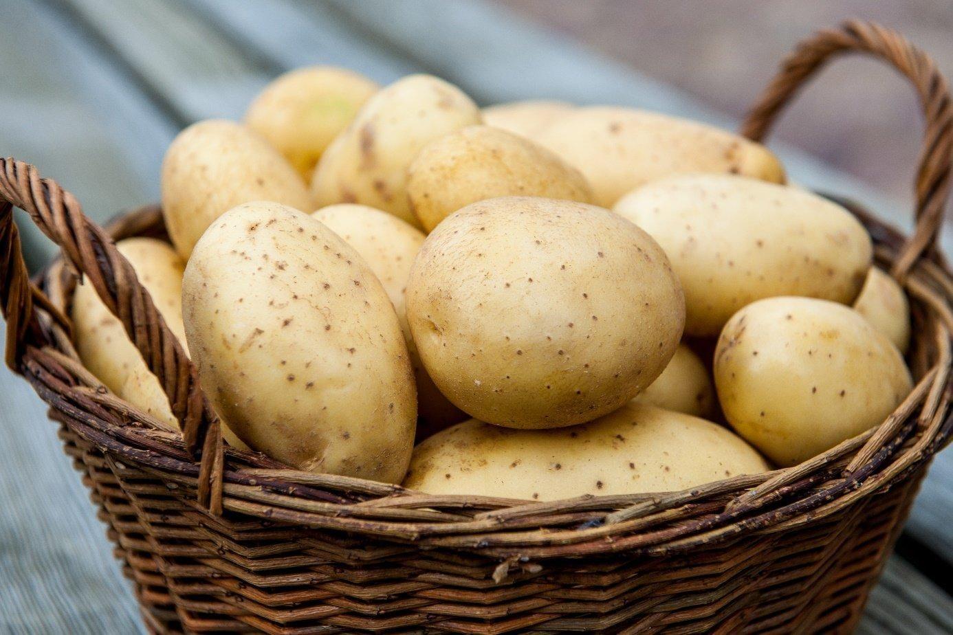 Интересный способ выращивания картофеля. Как выращивать картофель без особых трудозатрат.
