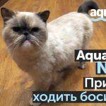 Кварц-винил Aquafloor NANO — ремонт квартиры в Петербурге! Как не испортить пол, если дома есть кот?