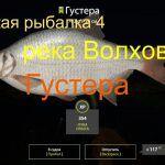 Русская рыбалка 4 — река Волхов — Густера