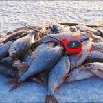 ЖИРНАЯ ПЛОТВА НА МОРМЫШКУ! КАКАЯ ПРИКОРМКА  ЛУЧШЕ? Рыбалка на плотву.