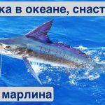 Зимняя рыбалка в океане. Рыболовные снасти   Жизнь на яхте Cupiditas