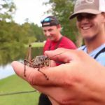 Fishing w GIANT LIVE GRASSHOPPERS Live Bait Fishing #fishing #Рыбалка #TOP_VIDEO