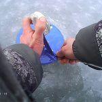 Подлещик со льда, жерлицы, бешенный клёв