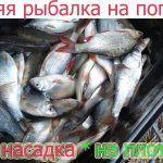 Рыбалка на крупную плотву зимой 2020.ЛУЧШАЯ НАСАДКА ДЛЯ ПЛОТВЫ,ЛЕЩА,КАРАСЯ ЗИМОЙ!