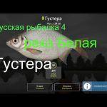 Русская рыбалка 4 — река Белая — Густера