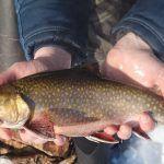 Январь 2020. Ловим форель  / Рыбалка в Канаде