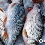 Зимняя рыбалка, подледные съемки, кадры как в космосе, красивые съемки, подводные съемки, необычно.
