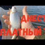 Днестр платный? / Февральская рыбалка