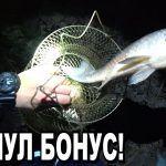 КАРАСЬ ЛАПОТЬ не лезет в ЛУНКУ! Рыбалка 2020 с ночёвкой!