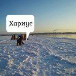 Рыбалка на хариуса 8 километр