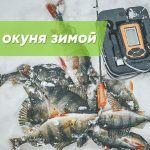 Зимняя рыбалка. Как найти окуня