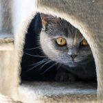 Домик для кошки из фанеры своими руками