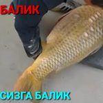 Енг катта балик созон охота на рыбалка
