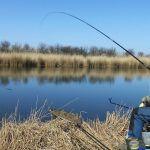 Ловля тарани и плотвы на поплавок в начале марта. Как поймать тарань на поплавок весной.