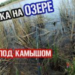 РЫБАЛКА НА ОЗЕРЕ / КРУПНЫЙ КАРАСЬ НА УДОЧКУ #карась #озеро #рыбалка #удочка #поплавок #рыбалка2020