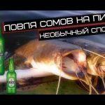 Рыбалка на пиво,ловля сомов на пиво / fishing for catfish in beer