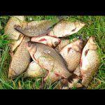 Рыбалка на поплавок, ПОПАЛ на ЖОР , Рыбалка весной 2020 , ЛОВЛЯ КАРАСЯ My fishing