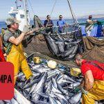 Рыбалка в Италии/Рыбаки в Палермо/Рыбалка сетями в Италии