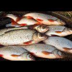 Рыбалка весной 2020 на САЛО , Рыбалка на поплавок весной