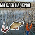 ВЕСЕННИЙ ЖОР / ЛОВЛЯ КАРАСЯ / СОЛНЕЧНЫЙ ОКУНЬ #карась #окунь #рыбалка #клев #карасьвесной