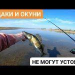 КРУПНЫЙ СУДАК И ОКУНЬ ДУРЕЮТ ОТ ЭТОЙ ПРОВОДКИ! Рыбалка на МИКРОДЖИГ на ставке!