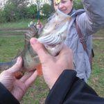 ЛОВИЛА ТОЛЬКО ЭТА БЛЕСНА | рыбалка на окуня щуку и карася на поплавок и боковой кивок