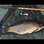 Ловля Карпа весной 2020 Рыбалка весной Советы