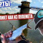 МАКОРТЫ / ЛОВЛЯ ПЛОТВЫ НА СКОЛЬЗЯЩИЙ ПОПЛАВОК / НА ХЛЕБ #макорты #плотва #ловля #рыбалка #поплавок