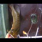 Рыбалка на щуку в Астраханской области/Pike fishing in Astrakhan region