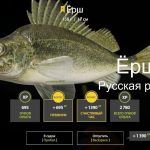 Русская рыбалка 4 — река Белая — Ёрш
