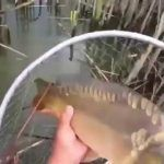 Смотреть всем рыбалка в челябинской области
