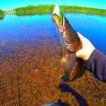 ЗУБАСТЫЕ РЫБИНЫ АТАКУЮТ ПРИМАНКУ! ЭТО НАДО ВИДЕТЬ! Рыбалка на змееголова в зарослях водорослей.